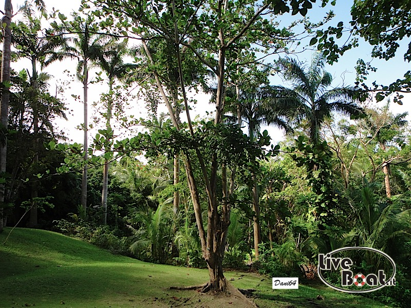 Barbados (Antille) 15/01/2011-dsc01819-jpg