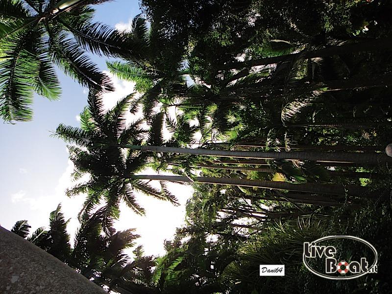 Barbados (Antille) 15/01/2011-dsc01821-jpg