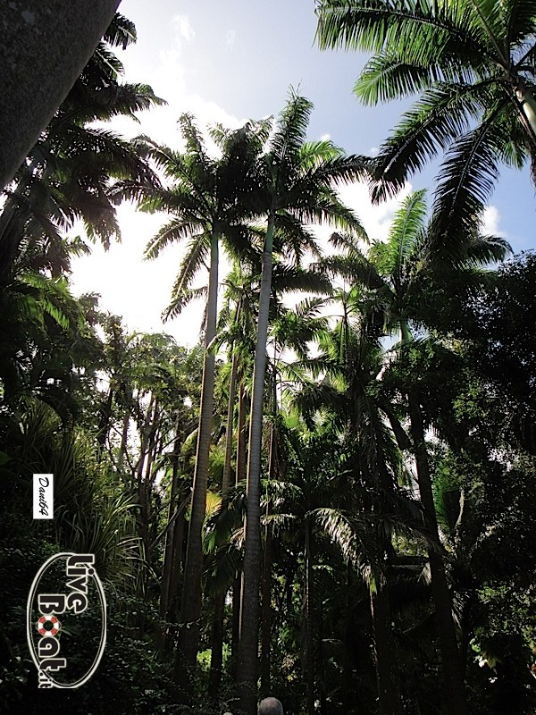 Barbados (Antille) 15/01/2011-dsc01822-jpg