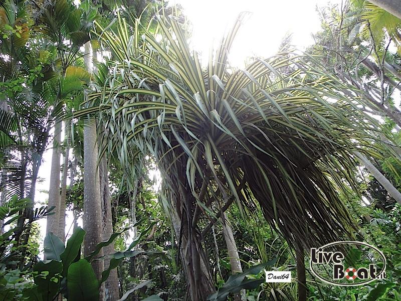 Barbados (Antille) 15/01/2011-dsc01824-jpg