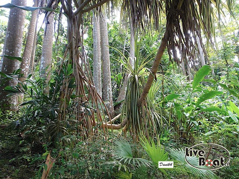 Barbados (Antille) 15/01/2011-dsc01825-jpg
