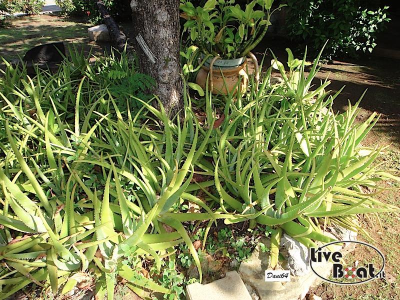 Antigua (Antille) 14/01/2011-dsc01762-jpg