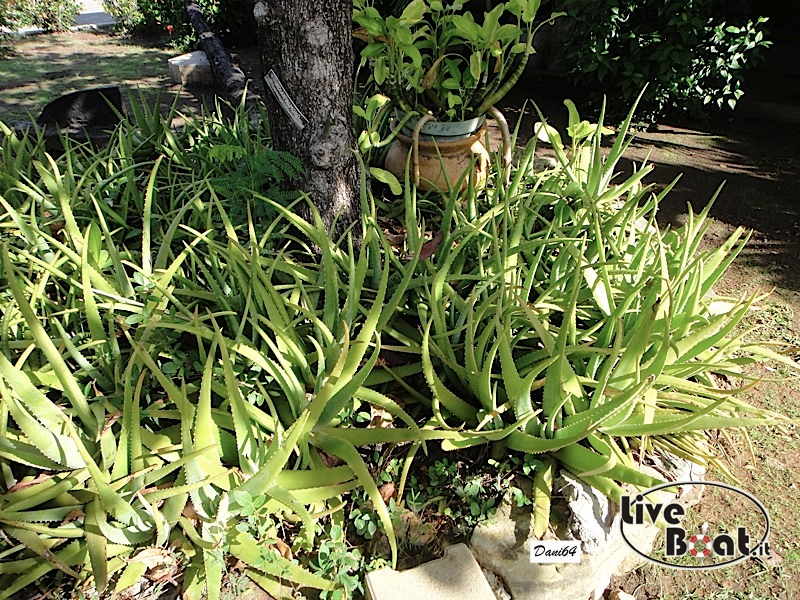 Antigua (Antille) 14/01/2011-dsc01763-jpg
