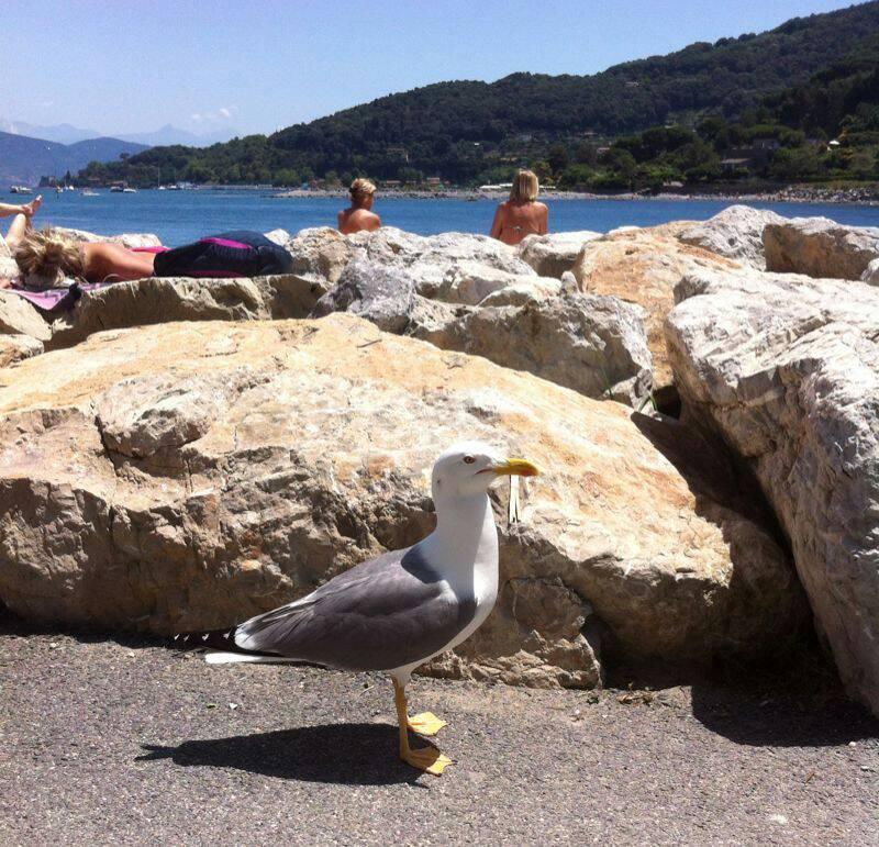 2014/06/07 La Spezia MSC Lirica-uploadfromtaptalk1402147362509-jpg